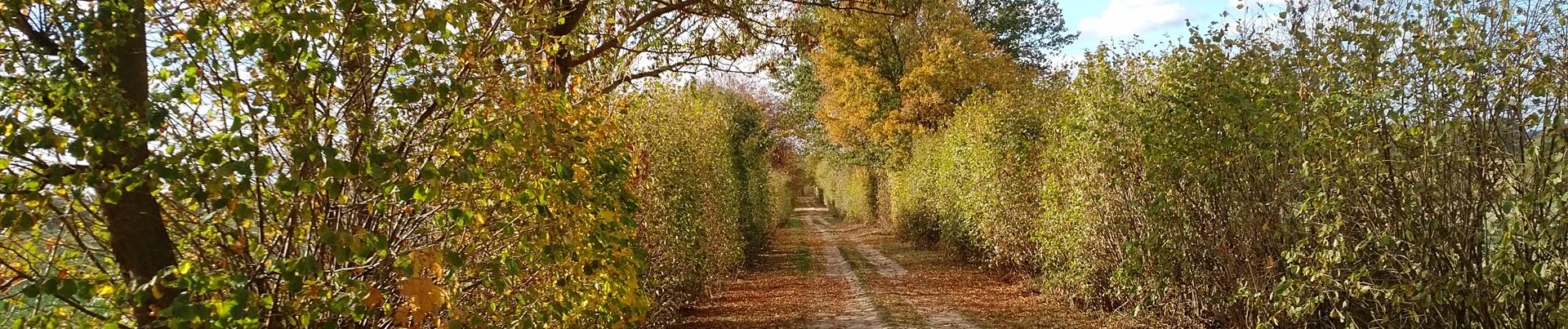 Startseite Herbst5