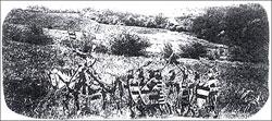 Der Dreißigjährige Krieg 1618 - 1648©Amt Gadebusch